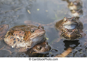 Frogs in a pond