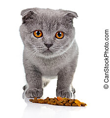 Little kitten eating pet food isolated on white background
