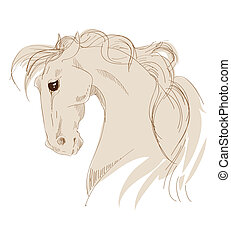 head of a horse on a white background