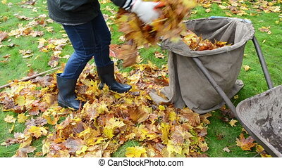 woman load barrow leaves - woman hand glove load colorful...
