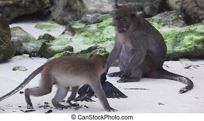 Prey - Wildlife monkey hitting black bird