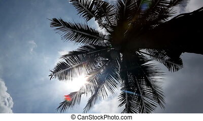 Palm - Beautiful palm with sun and blue sky.