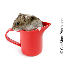 hamster in cup - isolated red plastic cup with grey hamster