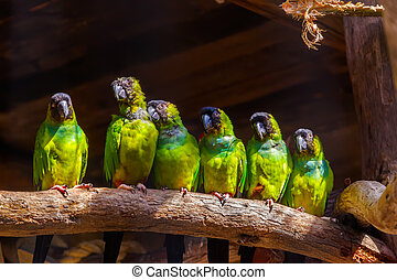 Parrots on a tree - animal background