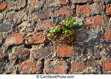 survive - eine Pflanze w?chst an einer Mauer