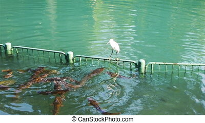 Heron on Jordan River in Israel - Heron sitting on fence on...