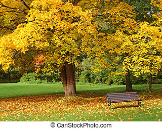 City park in autumn - Bench and maple in city park in the...