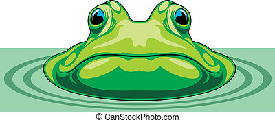 green frog - nice green frog on the white background