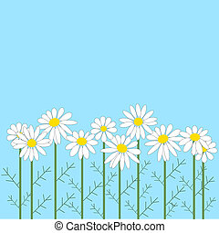 number of chamomile flowers on  bl