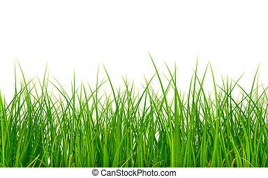 grass profile
