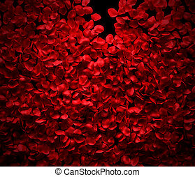Rose petals background on black ground