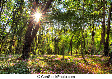 Forest magic - Magical vibrant HDR image of a forest with...