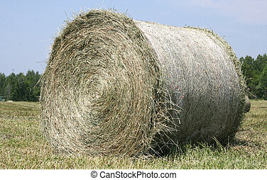 Hay - A tractor picks up the hay on the field forms it and...