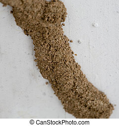 Termites Mud Tube Closeup - Closeup of Mud Tunnel or Tube of...