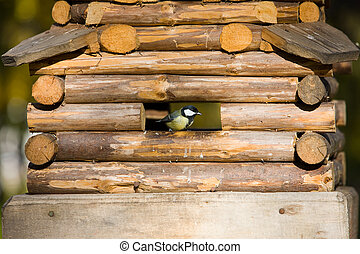 My house - Small titmouse in a wooden house feeding