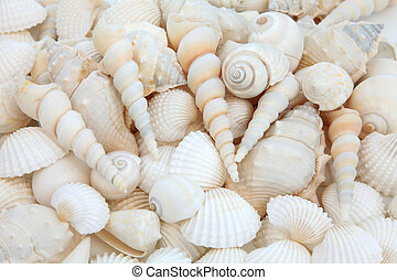Shell Beauty - White sea shell selection forming an abstract...