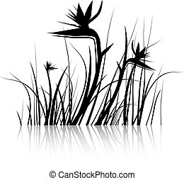 Bird of Paradise Flower (Strelitzia) Silhouette in Black and...
