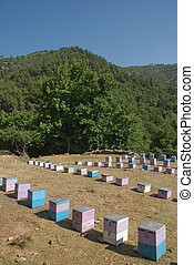 Hives - Colorful hives in mountain area of island Thassos...