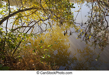 Abstract Lake Shore