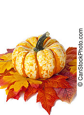 fall decorations - Shot of a pumpkin nestled on a collection...