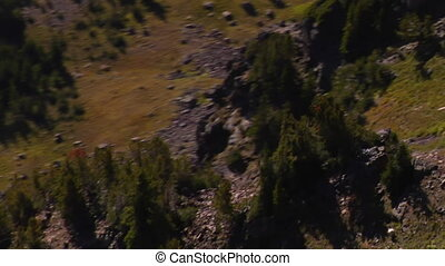 aerial shot of mountain goat herd