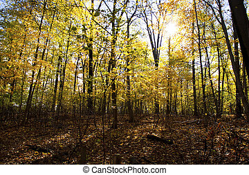 forest with autumn trees - View of forest with autumn trees.