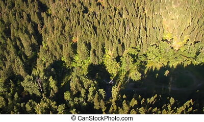 aerial shot of forested canyon