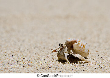 hermit crab running over the beach