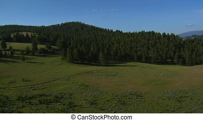 aerial shots of meadow and forest