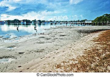 playa, YAMBA