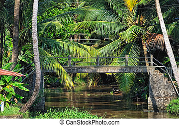 Bridge in Jungle - Stone bridge in jungle across the river