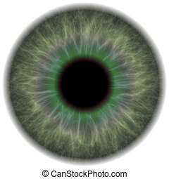 Green Eye Iris - A highly detailed iris section of the human...
