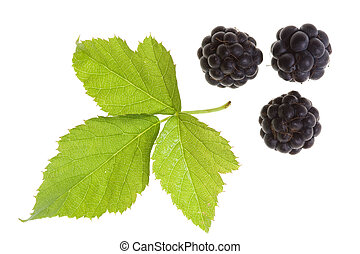 Blackberry  isolated - Blackberry and leaf isolated on white