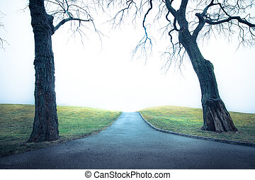 Path with Trees - Empty path with trees to unknown place on...