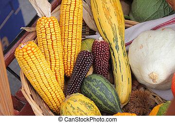 maíz, Mazorcas