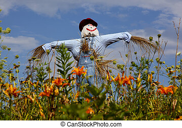 Scarecrow and lilies - scarecrow out in a field with lots of...