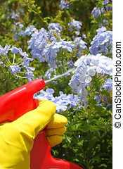 spraying pesticide - hand in yellow glove holding a...