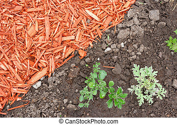 Dirt and mulch - Black dirt and red mulch background