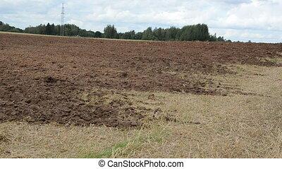 plowed field bird stork