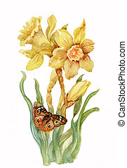 yellow narcissus on white backgroun - beautiful yellow...