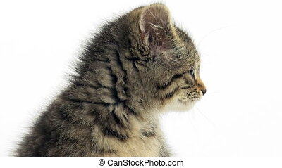 Cute tabby kitten on white backgrou - Cute baby tabby cat...