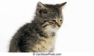Cute tabby kitten on white backgrou