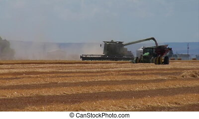 combine offloads wheat to tractor
