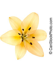 image of a yellow flower - Close-up shot of a yellow flower...