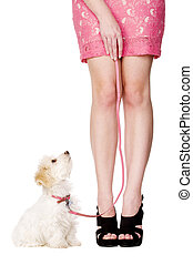 Puppy sat looking up at woman wearing a pink skirt - Small...