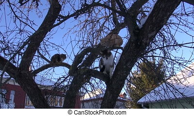 domestic cats group on winter tree
