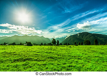Green landscape in New Zealand - Beautiful green landscape...