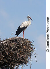 Stork in its nest over a clear blue background
