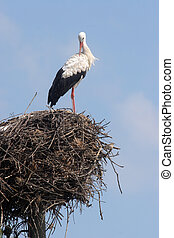 Stork in its nest over a clear blue backround