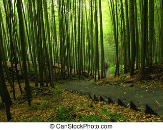 Green Bamboo Forest - Lush bamboo forests on the slopes of...